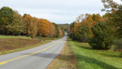 Pond road leaves starting to change color. Photo taken by Jan Clowes